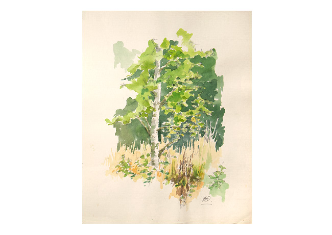 Akvarel af Helge Qvistorff af Birketræ